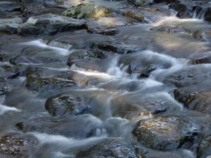 滝ノ谷川上流の写真素材 [FYI00442146]