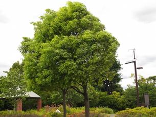 暴風に吹かれる木の写真素材 [FYI00442189]