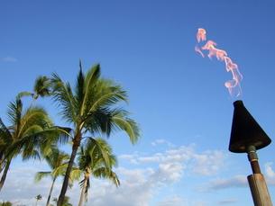 やしの木と炎の写真素材 [FYI00442224]