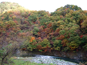 芦ノ牧温泉の紅葉の写真素材 [FYI00442248]