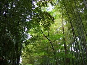 竹林の写真素材 [FYI00442259]