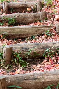 紅葉した落ち葉と階段の写真素材 [FYI00442301]