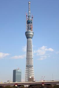 浅草から望む東京スカイツリーの写真素材 [FYI00442502]