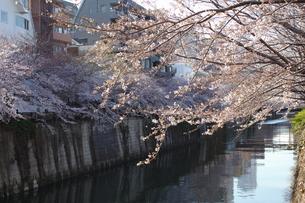 目黒川・なかめ公園橋と中里橋の間の写真素材 [FYI00442565]