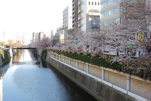 目黒川・なかめ公園橋から田楽橋の写真素材 [FYI00442583]