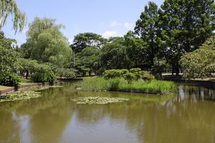 青森・合浦公園の池の写真素材 [FYI00442738]
