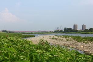 多摩川の写真素材 [FYI00442893]