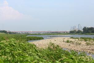 多摩川の写真素材 [FYI00442915]
