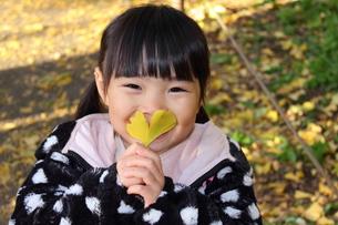 イチョウの葉で口を隠す女の子の写真素材 [FYI00442979]