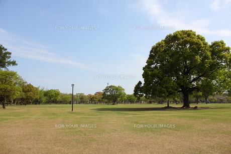 熊本城公園の広場の写真素材 [FYI00443045]