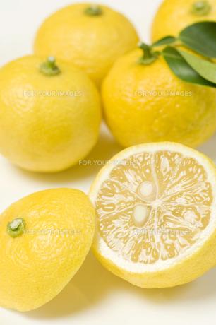 柚子切り口1の素材 [FYI00443336]