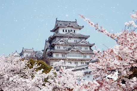 姫路城と桜吹雪1-4の写真素材 [FYI00443425]