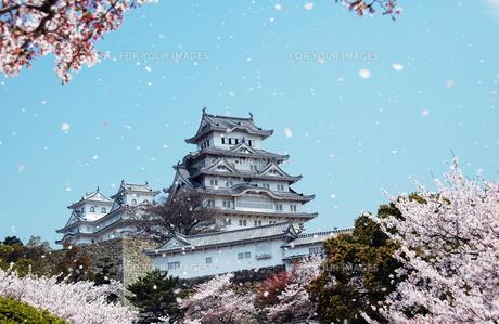 姫路城と桜吹雪1-1の素材 [FYI00443428]
