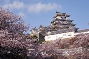 姫路城と桜1-7の素材 [FYI00443440]