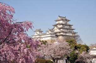 姫路城と桜1-4の素材 [FYI00443447]