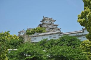 姫路城と新緑-1の素材 [FYI00443452]