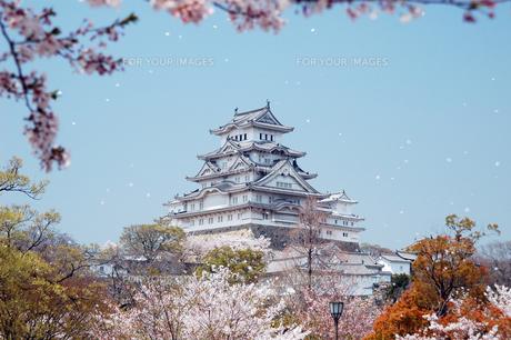 姫路城と桜1-1の素材 [FYI00443454]