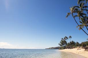 ヤシの木と海岸線ハワイ横位置-2の素材 [FYI00443546]