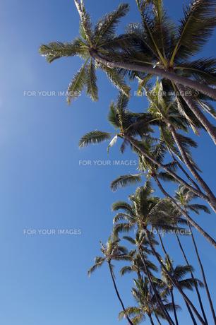 ヤシの木と青空縦位置?2の素材 [FYI00443562]