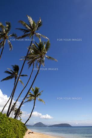 ヤシの木と海岸線ハワイ縦位置-1の素材 [FYI00443577]