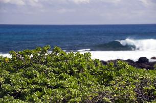 サンディ・ビーチ、オアフ島、ハワイi-1の写真素材 [FYI00443583]