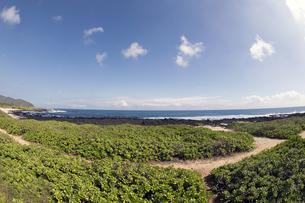 サンディ・ビーチ、オアフ島、ハワイi-2の写真素材 [FYI00443586]