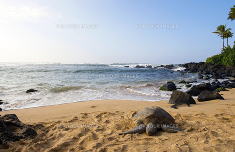 ウミガメのいる海岸-3の素材 [FYI00443609]