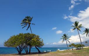 ヤシの木と無人の海岸線-4の素材 [FYI00443630]