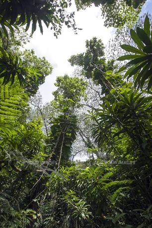 マノアの滝の熱帯植物-1の素材 [FYI00443665]