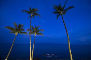 夜明け前のヤシの木のシルエット-2の写真素材 [FYI00443702]