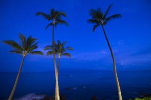 夜明け前のヤシの木のシルエット-1の写真素材 [FYI00443708]
