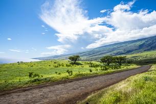 マウイ島ハレアカラ国立公園の東海岸-5の素材 [FYI00443747]