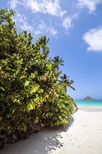 オアフ島ラニカイビーチの路地から望むモクルア島-3の写真素材 [FYI00443765]