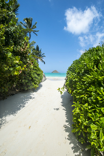オアフ島ラニカイビーチの路地から望むモクルア島-2の写真素材 [FYI00443775]