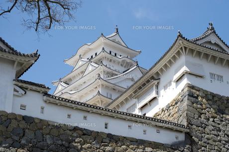 姫路城と桜、改修後-12の素材 [FYI00443887]
