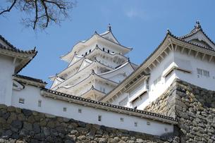姫路城と桜、改修後-12の写真素材 [FYI00443887]