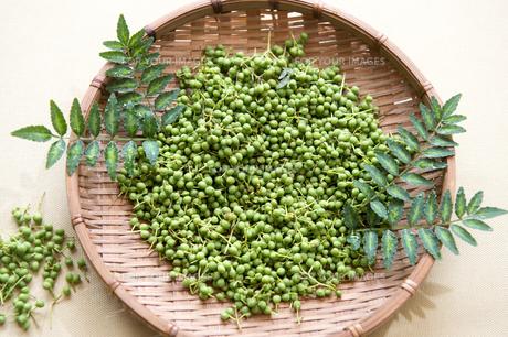 山椒の実と葉、採れたて-1の素材 [FYI00443913]