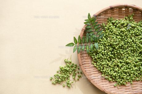 山椒の実と葉、採れたて-2の素材 [FYI00443918]