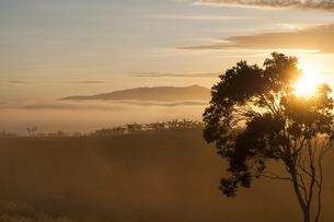 アサートン高原、オーストラリアの朝霧-1の素材 [FYI00443927]