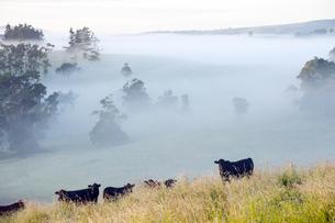 アサートン高原、オーストラリアの朝霧-3の素材 [FYI00443943]