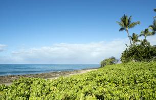 コオリナリゾート、オアフ島、ハワイ-8の写真素材 [FYI00443966]