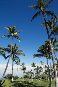 コオリナリゾート、オアフ島、ハワイ-6の写真素材 [FYI00443979]