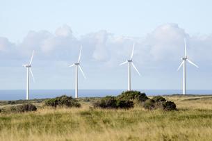 サウスポイントのPali O Kulani-Wind Farm-5の写真素材 [FYI00444009]