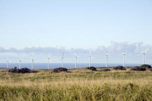 サウスポイントのPali O Kulani-Wind Farm-7の写真素材 [FYI00444010]