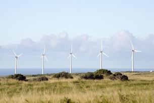 サウスポイントのPali O Kulani-Wind Farm-4の写真素材 [FYI00444011]