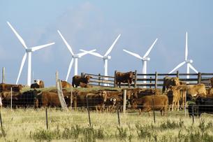 サウスポイントのPali O Kulani-Wind Farm-2の写真素材 [FYI00444015]