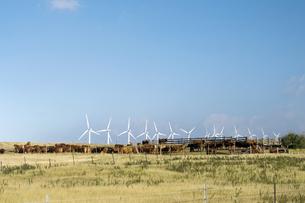 サウスポイントのPali O Kulani-Wind Farm-1の写真素材 [FYI00444020]