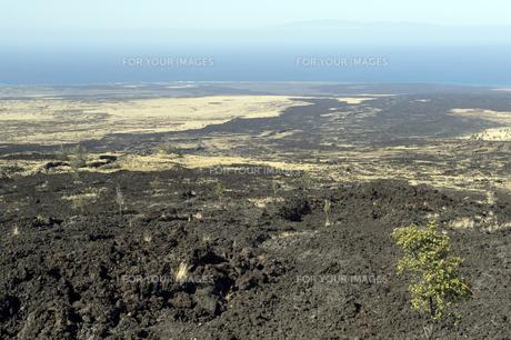 ママロホアハイウエイ ハワイ島-2の写真素材 [FYI00444027]