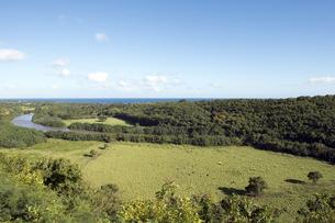 ワイルア川、カウアイ島、ハワイ-3の写真素材 [FYI00444050]