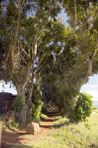Anini Beach Princevilleの写真素材 [FYI00444072]